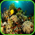 산호 배경 화면