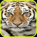 Nature Tiger wallpaper