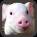 작은 돼지 벽지
