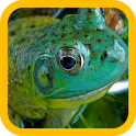 Big Frogs wallpaper