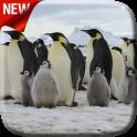 पेंगुइन लाइव वॉलपेपर