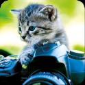 Katzen Hintegrundbilder