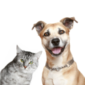 Dog Cat Animal Sounds