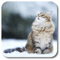 Snow Cats Live Wallpaper