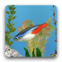 aniPet 민물고기 수족관 라이브 배경화면