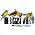Biggest Week in Am. Birding