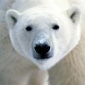 Amazing Bears Themes