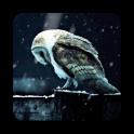 Sad Owl HD Livewallpaper