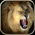 Wild Lion Hunt 2016