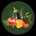 Овощи - лучшие рецепты PRO