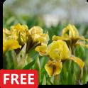 Iris Flowers Live Wallpaper FREE