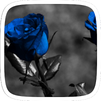 Pure Rose Theme