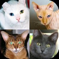 Cats Quiz