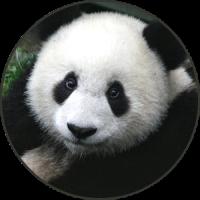Panda Sonidos