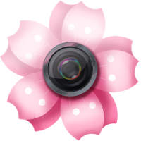 사쿠라 사진 프레임-자연 버찌 꽃