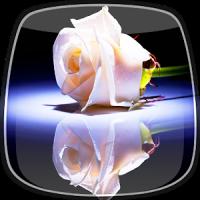 सफेद गुलाब लाइव वॉलपेपर