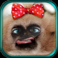 재미 원숭이 라이브 배경 화면