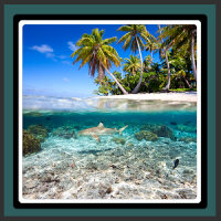 Live Wallpapers Under The Sea
