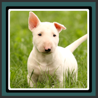 Live Wallpapers – Puppies