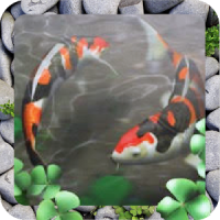 Free Waterpool Live Wallpaper