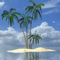 Palm In Tropical Island Live W