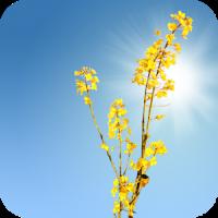 Yellow Field Live Wallpaper