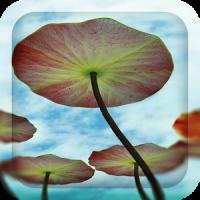 3D Water Lilies Live Wallpaper